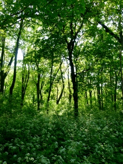 Forest at Mont Royal Park in Montreal