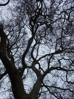 Black and white bare tree at Hyde Park, London