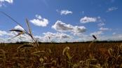 The Lumieers, Farm, fall, blue sky