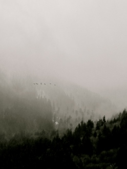 fog over BC mountains, birds, Mission, Fraser Valley