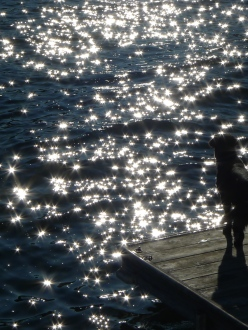 Sparkling water silhouette Muskoka shadow dog