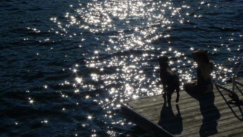 Sparkling water silhouette Muskoka shadow dog