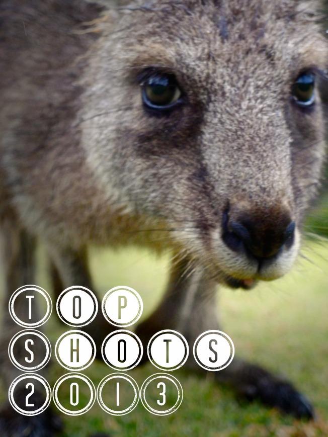 Close up kangaroo top photos from 2013