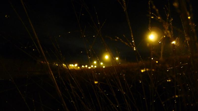 dew dropplets on grass, night
