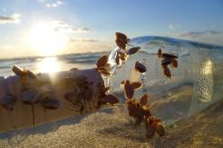 Mussles on bottle drifted ashore from ocean