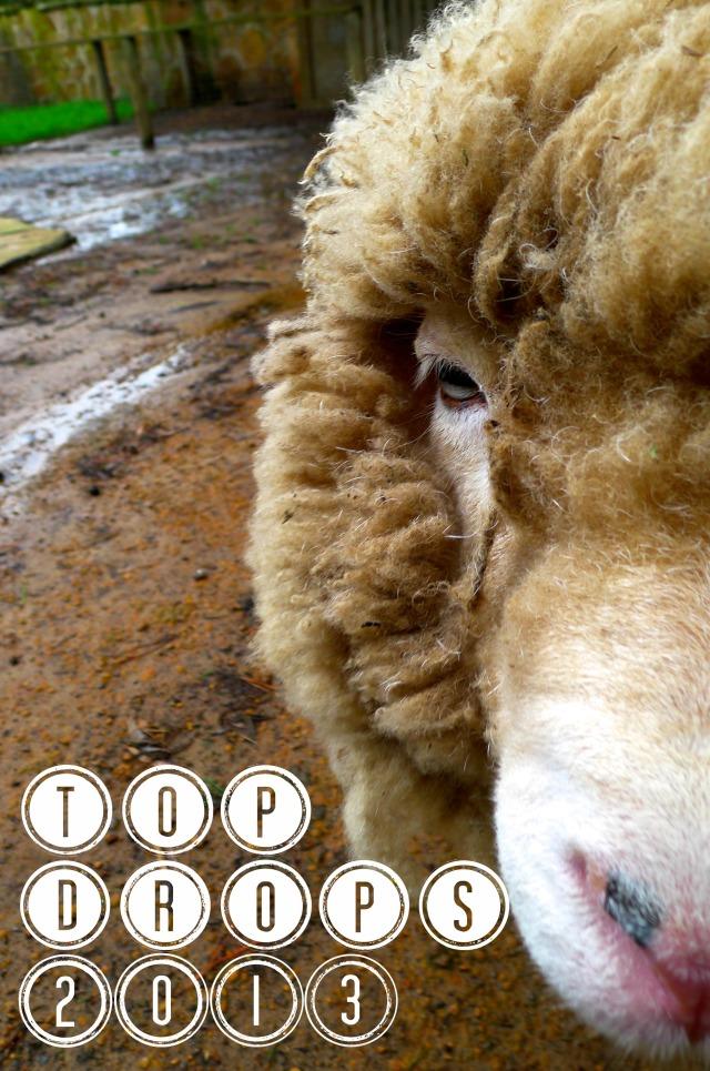 Top Drops 2013 Close up of sheep
