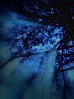 Looking up at tree at night, Montreal