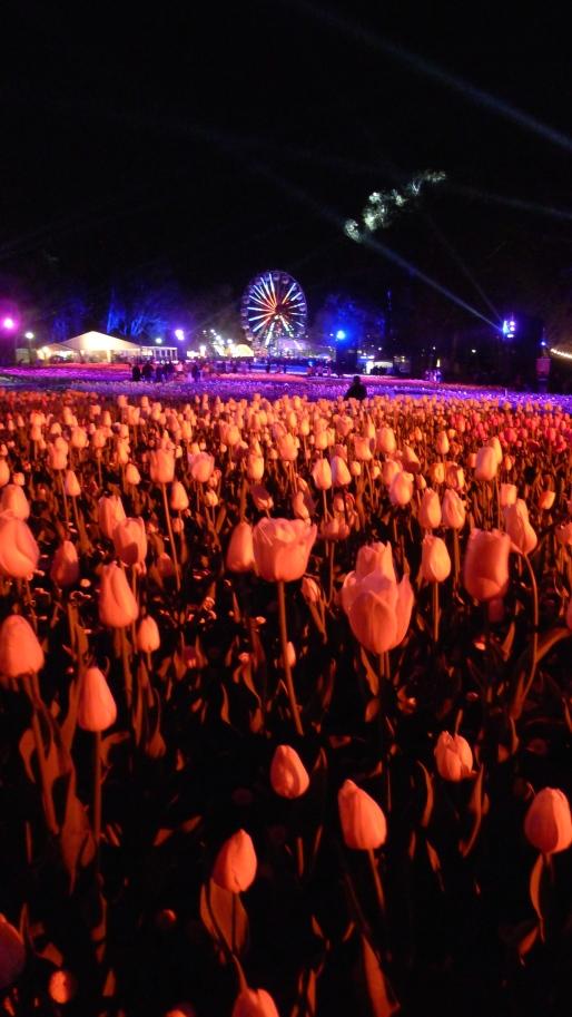 Ferris Wheel Night Fest Floriade Canberra